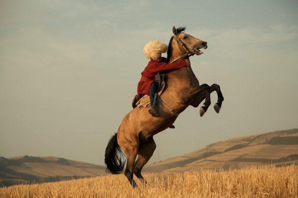 Iranian Turkmen horses