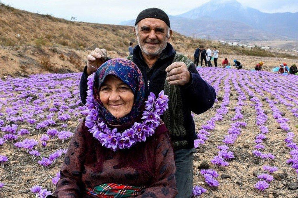 Iranian saffron benefits