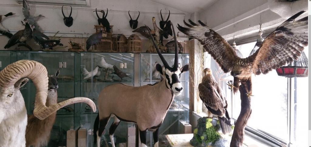 Darabad Museum of Wildlife and Nature